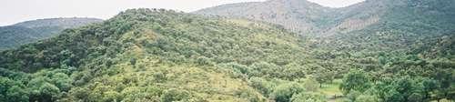 Monte de la Sierrezuela 1